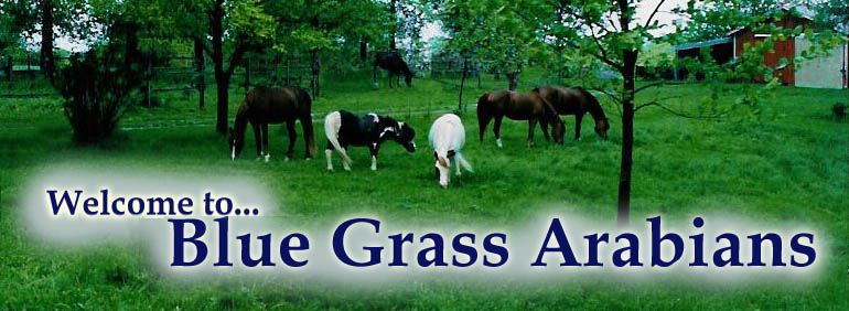http://www.bluegrassarabians.net/Blue-Grass-Arabian/images/bga_north_crop.jpg